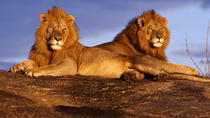 7-Day Amboseli and Tsavo National Park Safari from Nairobi, Nairobi, Multi-day Tours