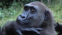 8 DAYS 7 NIGHTS UGANDA GORRILLA TREKKING, Kampala, Cultural Tours