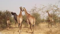 Half-Day Somone Lagoon and Bandia Park Safari from Dakar, Dakar, Half-day Tours