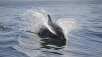 Dolphin and Manatee Sightseeing River Tour, Cocoa Beach, Dolphin & Whale Watching
