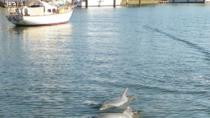 Private Tour: Dolphin and Manatee Sightseeing from Cocoa Beach, Cocoa Beach, Private Sightseeing ...