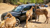 Private Day Tour to Beijing Badaling Wildlife Park and Great Wall, Beijing, Nature & Wildlife