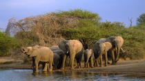 4-Day Wild Life Safari Tour of Kruger National Park from Johannesburg, Johannesburg, Multi-day Tours