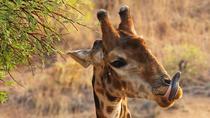 5-Day NON-SHARED Private Wildlife Safari Tour Incl Johannesburg Cultural Tour, Johannesburg,...