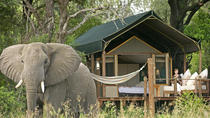 Couples 4-Day NON-SHARED Lux Private Safari Tour of Kruger Park from Johanesburg, Johannesburg