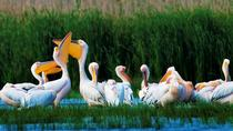 2-Day Private Danube Delta Discovery from Bucharest with 2 Boat Rides and 4 Traditional Meals, ...