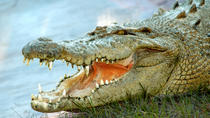 Gatorland Ticket with Transport, Orlando, Day Trips