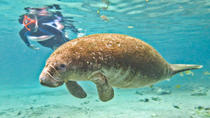 Swim with Manatees at Crystal River plus Everglades Airboat Adventure, Orlando