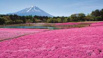 Fuji Shiba Sakura Festival Tour from Tokyo, Tokyo, Day Trips