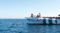 Dolphin Watching and Cave Boat Cruise from Albufeira, Albufeira, Dolphin & Whale Watching