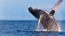 Whale Watching EcoAdventure, Big Island of Hawaii, Dolphin & Whale Watching