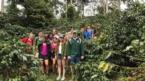 coffee express & exotic fruit Market Medellin, Medellín, Coffee & Tea Tours