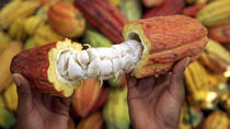 Cocoa Farm and Chocolate Tour, Cuenca, Chocolate Tours