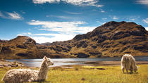 Private Tour to Cajas National Park Including Cloud Forest Hike, Cuenca