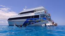 Lady Musgrave Day Trip from Bundaberg Including Snorkeling, Glass Bottom Tour and Guided Island ...