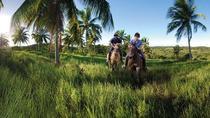 Horseback riding at the beach with privat polo lesson in Praia do Forte Poloclub, Salvador da...