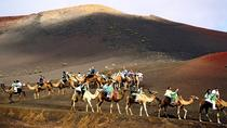 Camel Riding in Maspalomas Dunes, Gran Canaria, Nature & Wildlife
