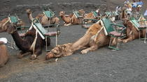 Camel safari in Timanfaya, Lanzarote, Nature & Wildlife