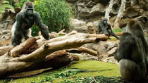 Day Trip to Tenerife Loro Park with transportation from, Tenerife, Full-day Tours