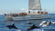 Dolphin watching and visit to Mogan with the catamaran Supercat, Gran Canaria, Catamaran Cruises