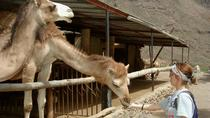 Gran Canaria Arteara Camel Park Camel Ride with Lunch and Transfers