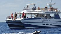 Gran Canaria Whale and Dolphin Spotting Cruise with Optional Swim Stop, Gran Canaria, Dolphin &...