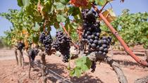 Guided Winery Tour in Mallorca, Mallorca, Wine Tasting & Winery Tours