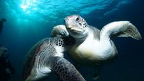 Tenerife Turtle and Snorkel Tour from Costa Adeje, Tenerife, Snorkeling