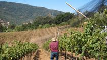 Silicon Valley Pathways to Rhone Valley, San Jose, Private Sightseeing Tours