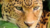 11Day Best of Kenya and Tanzania Group Camping Safari, Nairobi, Hiking & Camping