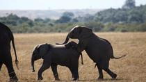 3-Day Amboseli National Reserve Safari from Nairobi, Nairobi, Multi-day Tours