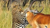 3-Day Budget Maasai Mara Safari from Nairobi, Nairobi, Multi-day Tours