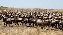 3-Day Masai Mara Luxury Safari, Nairobi, Cultural Tours