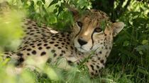 3-Day Samburu Luxury Safari, Nairobi, Multi-day Tours