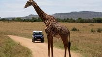3-Day Sweetwaters: Ol Pejeta Conservancy Safari from Nairobi, Nairobi, Multi-day Tours