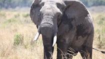 6-Days Samburu Lake Nakuru and Masai Mara Safari, Nairobi, Multi-day Tours