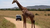 7-Day Maasai Mara Lake Nakuru Samburu and Mount Kenya Safari, Nairobi, Multi-day Tours