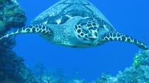 Private Discover Scuba Diving Course, Placencia, Scuba Diving