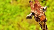 African Safari and Game Drive Mikumi, Dar es Salaam, Multi-day Tours