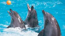 Dubai City Tour and Dolphin Show, Dubai, City Tours