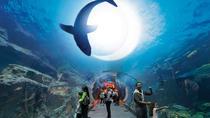 Dubai City tour and Dubai Mall Activities with Burj Khalifa, Dubai, City Tours