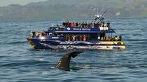 Full-Day Kaikoura Tour from Christchurch , Christchurch, Day Trips