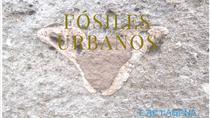 Paleontological tour in Cartagena, Cartagena, Ports of Call Tours