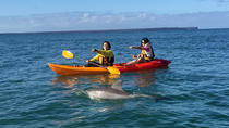 The Sands of Huskisson 2hr Sit On Top Kayak Tour, Jervis Bay, Kayaking & Canoeing