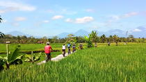 Electric Cycling Tour from Sanur to Ubud, Ubud, Cultural Tours