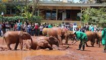 Giraffe Centre and David Sheldrick Half Day Tour, Nairobi, Day Trips