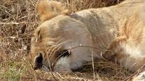 Kenya Family Safari, Nairobi, Kid Friendly Tours & Activities