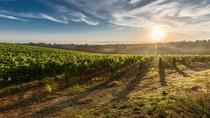 Half-Day Valpolicella Wine Experience, Lake Garda, Wine Tasting & Winery Tours