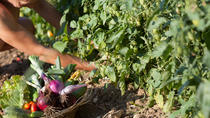 Vegetarian Cooking Class with EVOO and Castle cellars tour and wine tasting, Florence, Attraction...