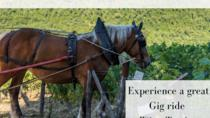 Wine with Horse and Buggy at a 900year old Castle, Florence, Attraction Tickets